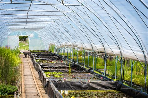 How To Make A Greenhouse For Plants