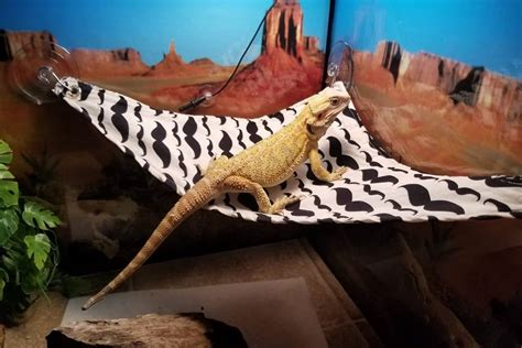How To Make A Hammock For A Bearded Dragon