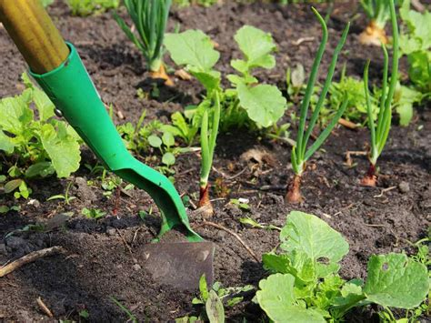 How To Make A Veggie Patch From Scratch