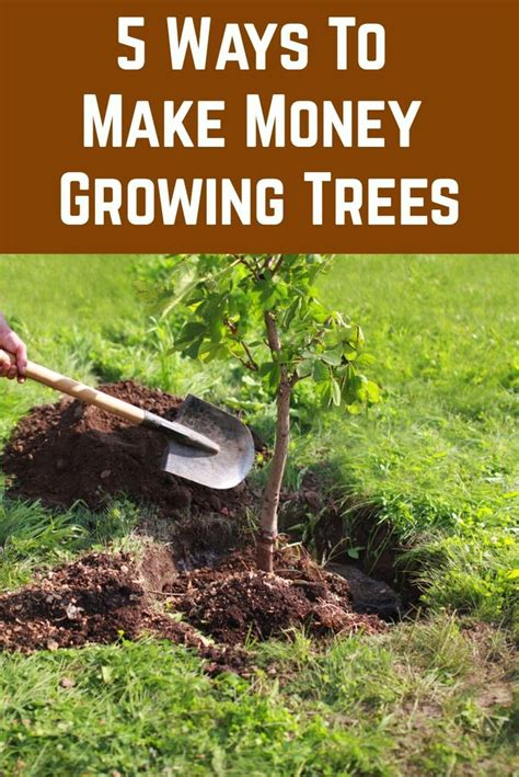 How To Make Money Growing Black Walnut Trees