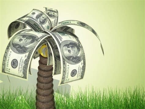 How To Make Money Growing Palm Trees