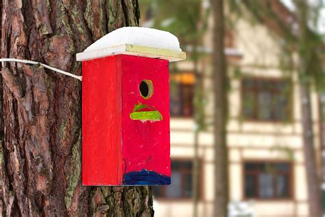 How To Mount A Birdhouse To A Tree