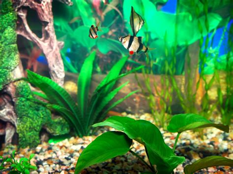 How To Neutralize Bleach In Fish Tank