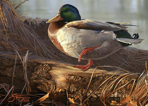 How To Paint A Duck Stamp