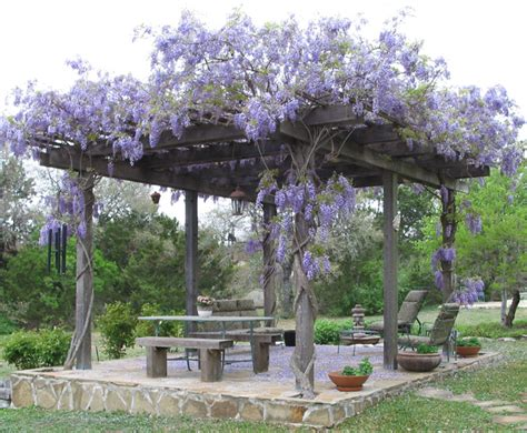 How To Pergola Wisteria