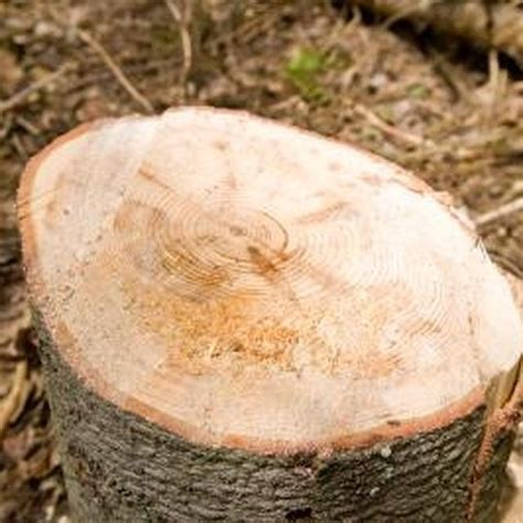 How To Preserve Tree Trunk Slices Walkway