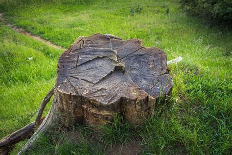How To Preserve Wood Stumps Outdoor