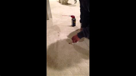 How To Remove Oil Based Wood Stain From Carpet