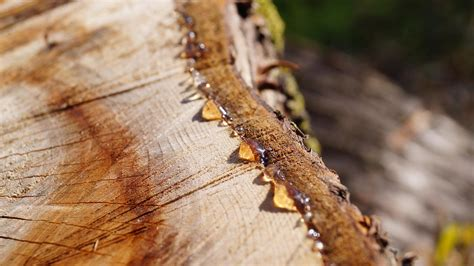 How To Remove Sap From Wood Furniture
