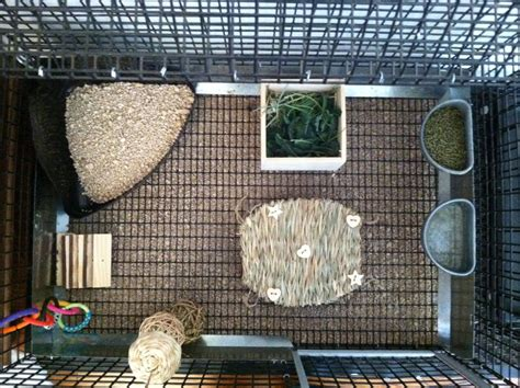 How To Set Up Rabbit Bedding