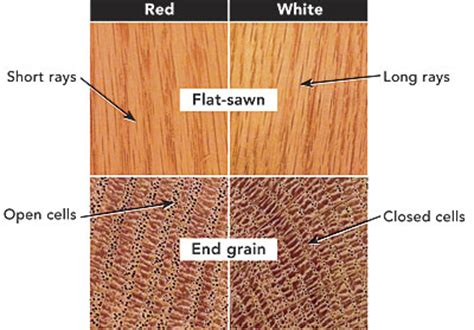 How To Tell White Oak From Red Oak