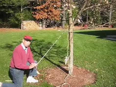 How To Use A Turnbuckle To Straighten A Tree
