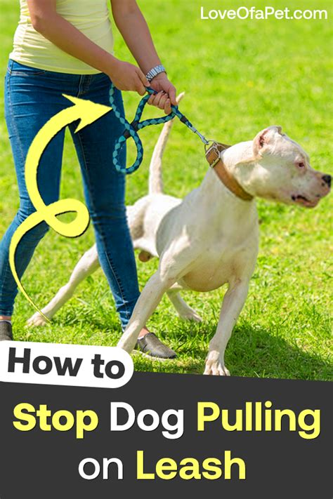 How to train your dog from pulling on leash.aspx Image