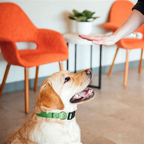 How to train your working dog.aspx Image