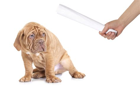 How To Potty Train A Young Dog And How To Train An Asthma Alert Dog