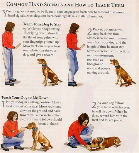 How To Train A Dog To Speak On Command And How To Train A Stubborn Dog To Listen