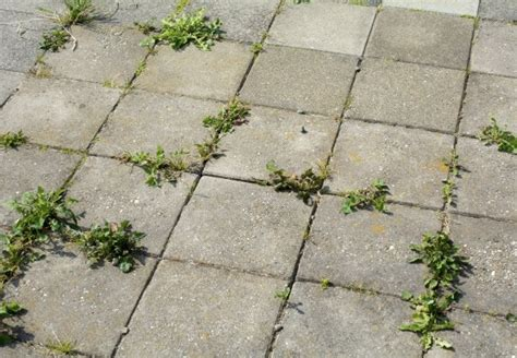 How-To-Kill-Weeds-Growing-Between-Patio-Pavers-Diy
