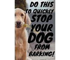Best How do you make a dog stop barking.aspx