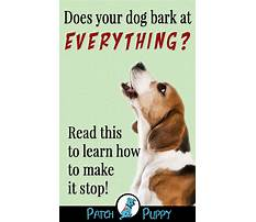 Best How do you train a barking dog
