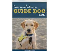 Best How much does it cost to train a guide dog
