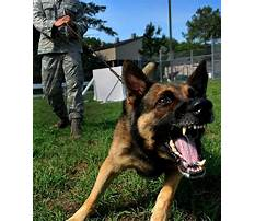 Best How much does protection dog training cost