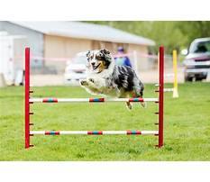 Best How to agility train your dog