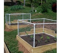 Best How to build a raised bed garden with screen