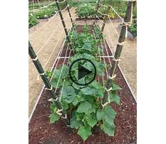Best How to build an arbor