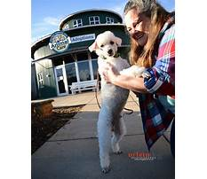 Best How to build an outdoor dog house.aspx