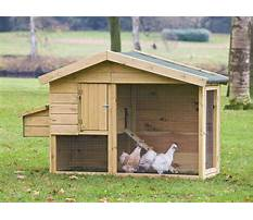 Best How to build chicken houses