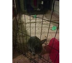 Best How to get a rabbit to poop