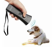 Best How to keep a dog from barking outside