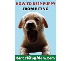 Best How to keep a puppy from nipping