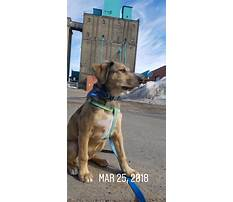 Best How to keep dog from barking while gone