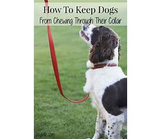 Best How to keep dogs from chewing