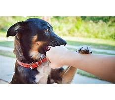 Best How to make a dog stop biting