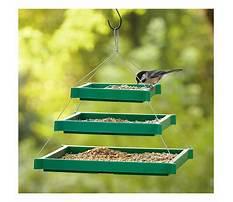 Best How to make a platform bird feeder.aspx