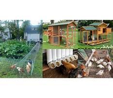 Best How to make your chicken coop bigger