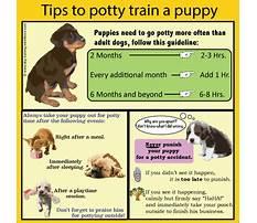 Best How to potty train my dog.aspx