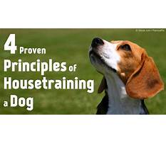 Best How to potty train older dogs.aspx