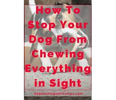Best How to stop a barking dog in crate.aspx