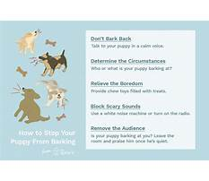 Best How to stop a dog barking for attention