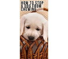Best How to stop a dog chewing