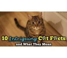 Best How to stop dog barking when alone.aspx