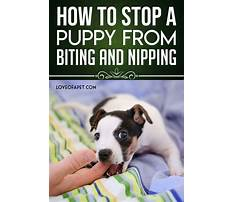 Best How to stop dog biting
