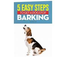 Best How to stop dogs barking at the door
