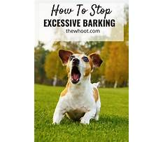 Best How to stop dogs barking