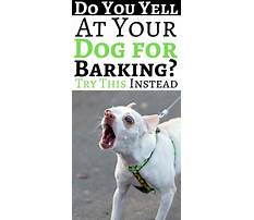 Best How to stop my dog from barking at people
