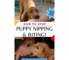 Best How to stop puppies nipping