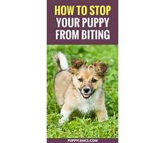 Best How to stop puppy play biting
